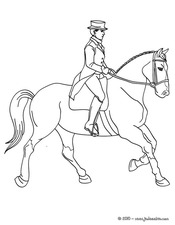 dressage cheval.jpg